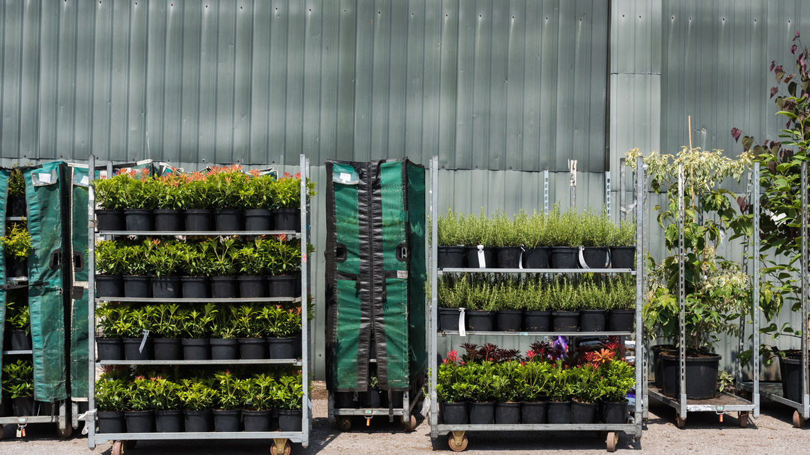 A Family Run Whole Nursery Supplying Independent Garden Centres Horticultural Retailers And Landscaping Professionals From Somerset For Over Forty
