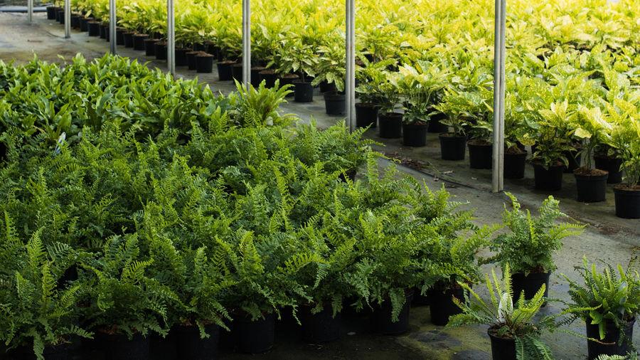 Plant Categories